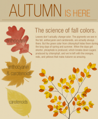 Autumn is Here! An infographic!