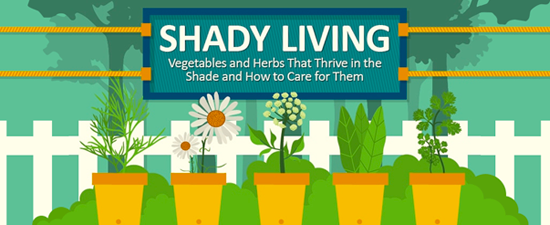 Vegetables and Herbs That Thrive in the Shade