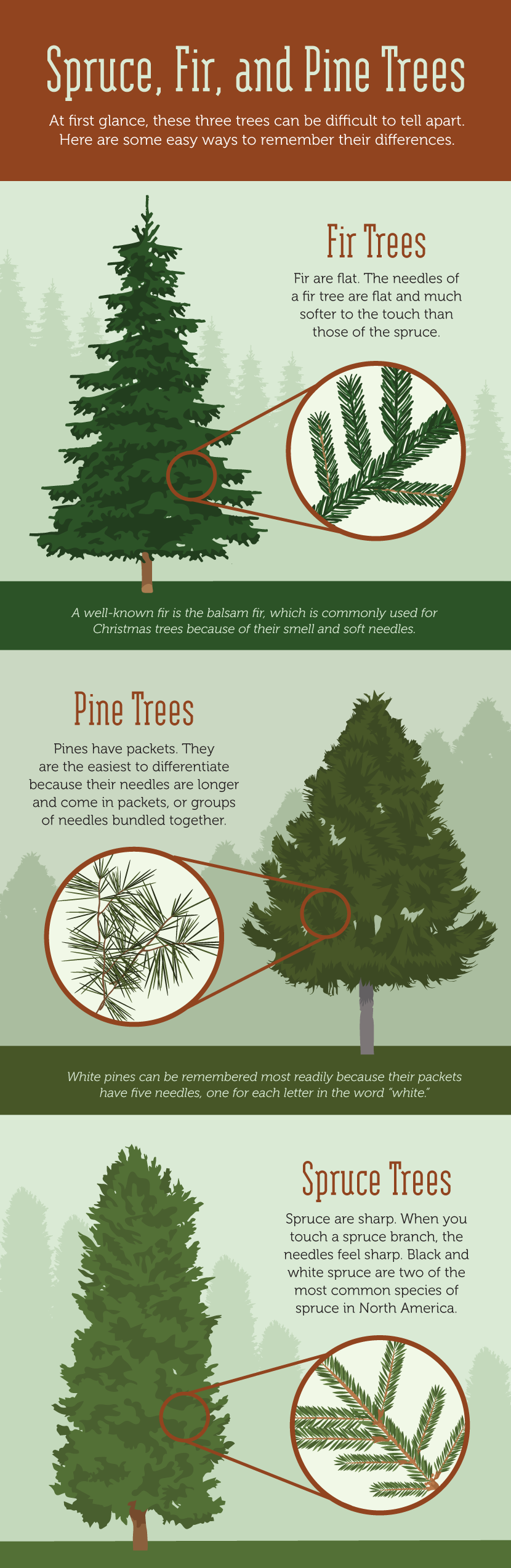 Spruce, Fir, and Pine - Learning to Read the Forest