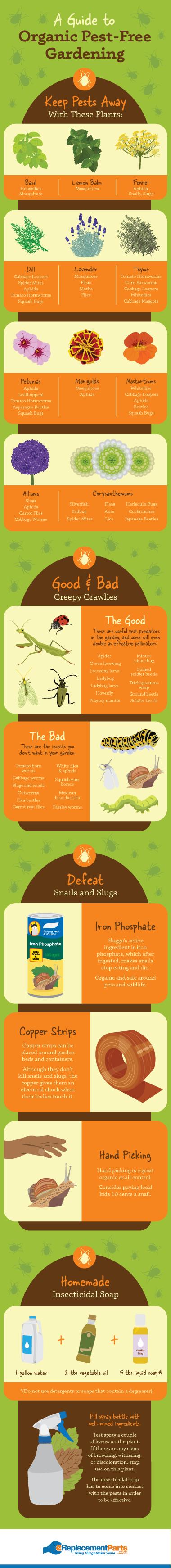 Organic Pest Solutions