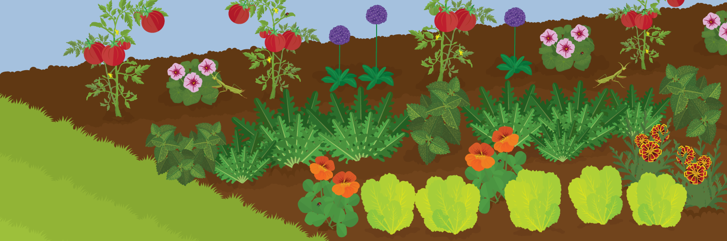 A Guide to Organic Pest-Free Gardening