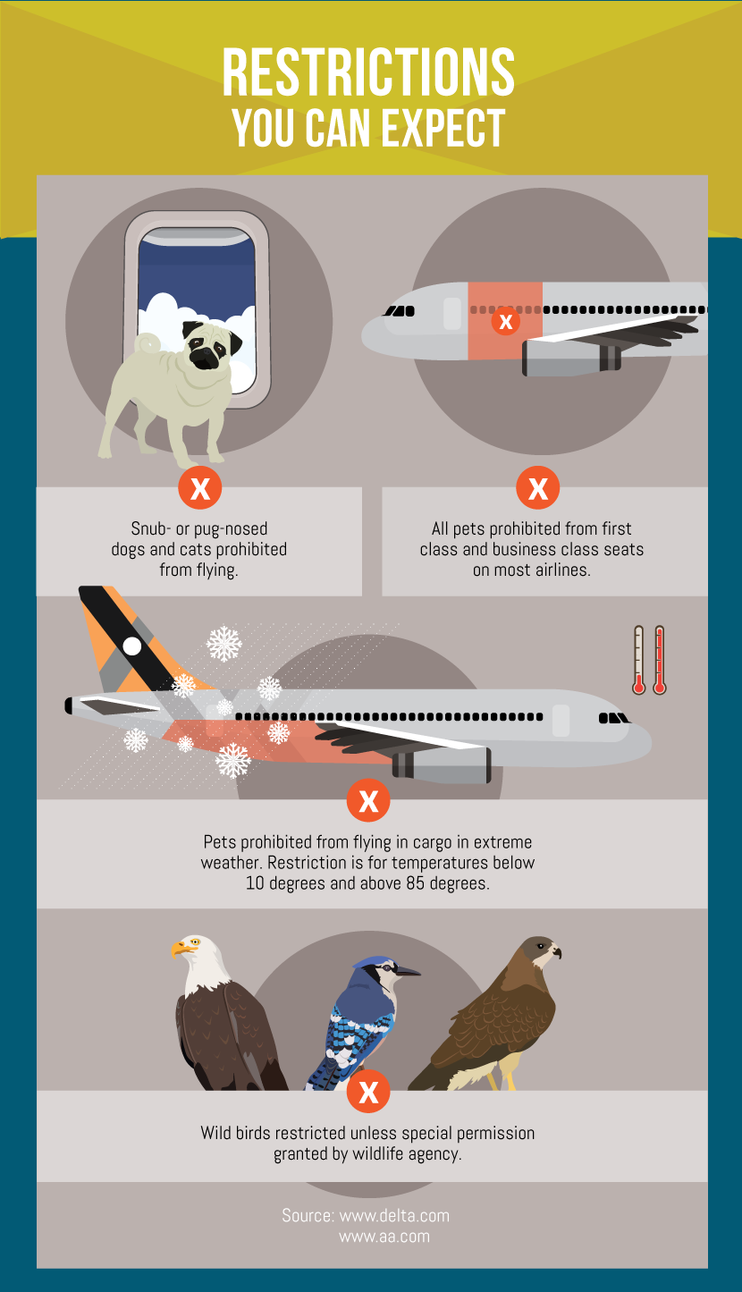 Restrictions to Expect When Flying With Pets - Guide to Flying with Your Pet