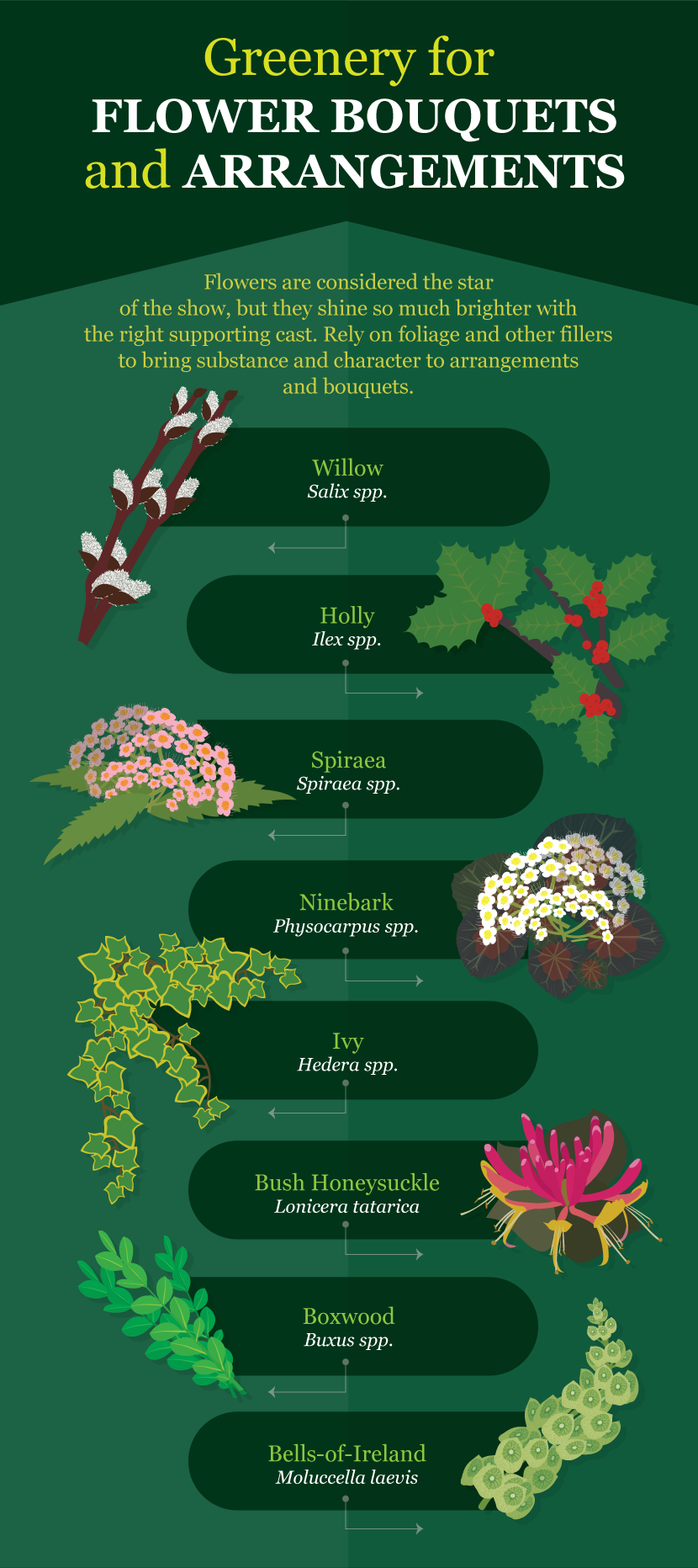 Greenery For Flower Arrangements - A Guide to Growing Your Own Cutting Flowers