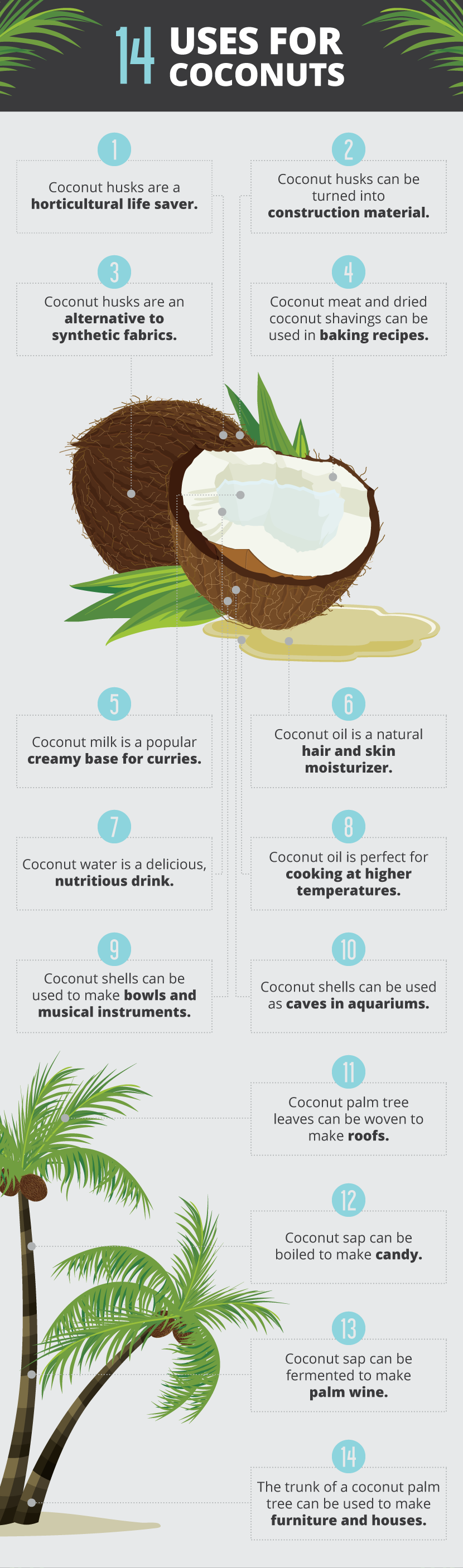 Uses For Coconuts - Unique Ways to Incorporate Coconuts Into Your Life