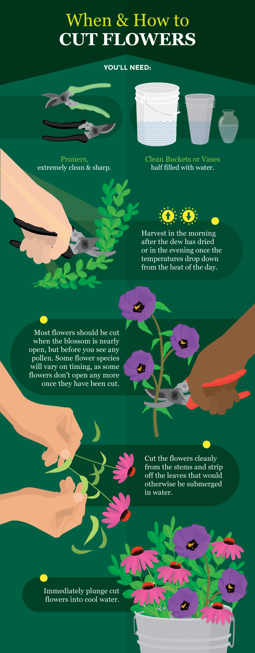 When and How to Cut Flowers - A Guide to Growing Your Own Cutting Flowers