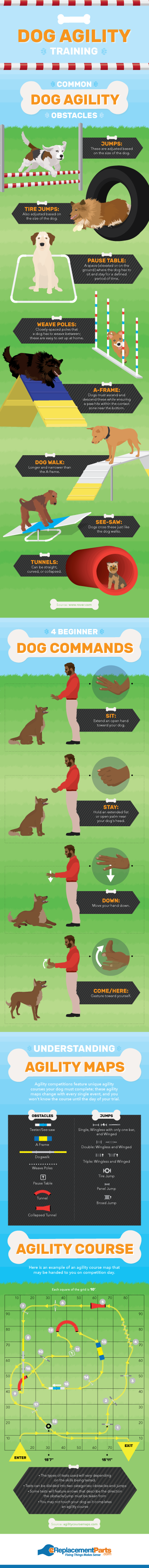 Try Agility Training For Your Dog