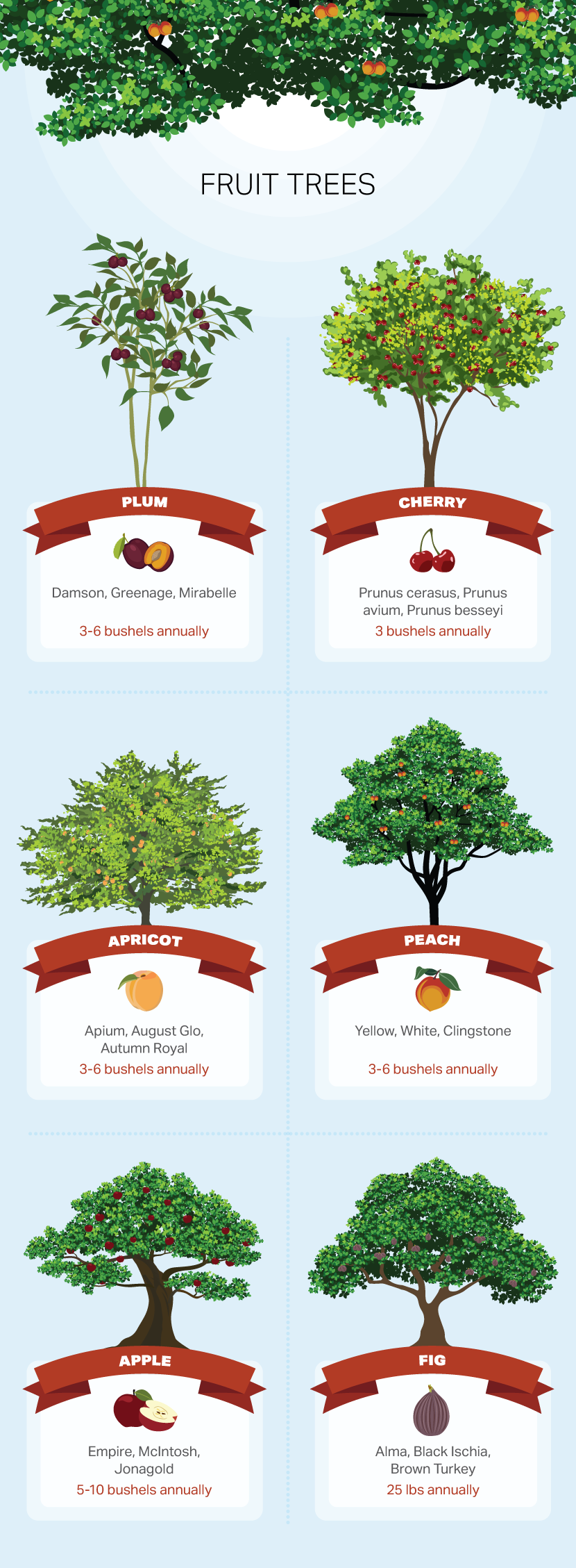 Fruit Trees - How to Choose a Tree For Your Yard or Garden