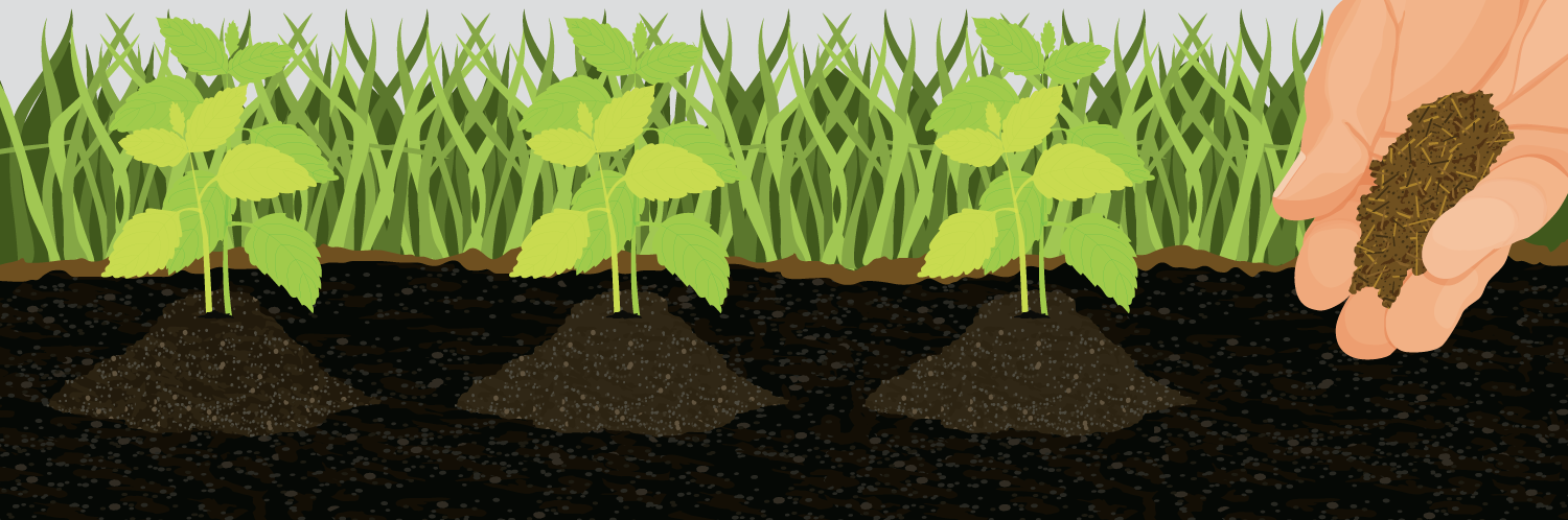 Cut the Crap: Making Your Own Environmentally Friendly Garden Fertilizers Is Easier Than You Think