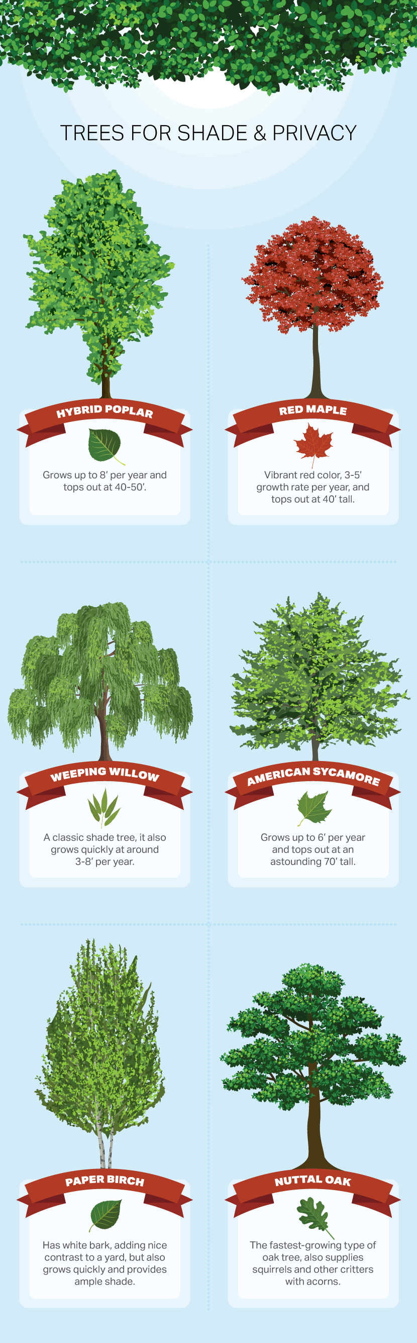 Trees For Shade and Privacy - How to Choose a Tree For Your Yard or Garden