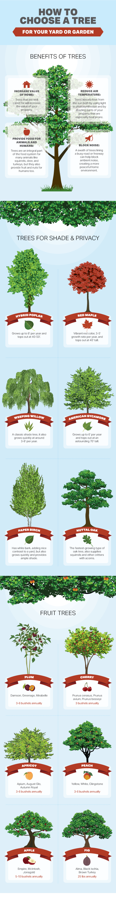 How to Choose a Tree For Your Yard or Garden